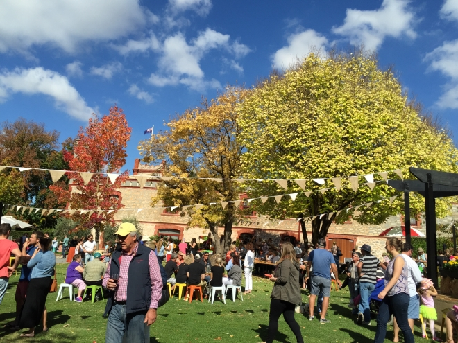 Festival Garden at Yalumba, April 15 2015