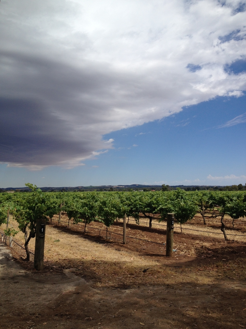 12 months in the Barossa – and some tips for making a lifestyle and careerchange